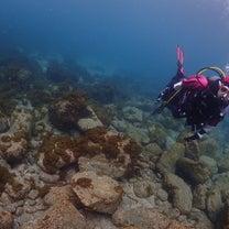 やる気MAX! アドバンス海洋! 長崎ダイビングスクール サンクチュアリ☆の記事に添付されている画像