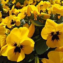 花が咲くの記事に添付されている画像