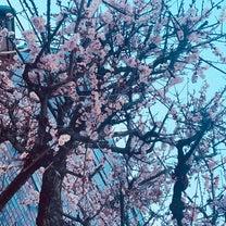 3月の新入荷♪⑥【神様ダーリン⑧,憂鬱な朝 NOBLE COLORS,他】の記事に添付されている画像