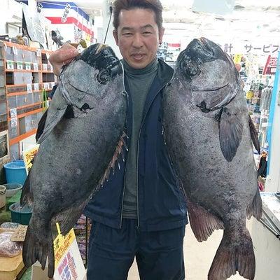 3/23 石鯛66cm/4.6Kg・63cm/4.42Kg 日山様(沖ノ島ヒナダの記事に添付されている画像