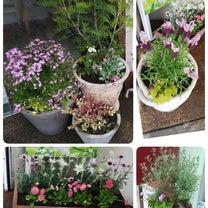 お店のお花♡の記事に添付されている画像