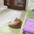 #犬のいる生活の画像