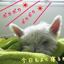 """懲りない夫婦……((유∀유))(†□† )""""の記事に添付されている画像"""