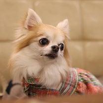 おデート in JOY & USJ♡の記事に添付されている画像