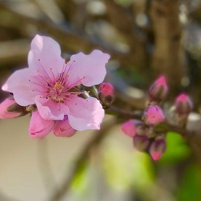 春色の記事に添付されている画像