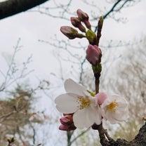 桜パトロール☆の記事に添付されている画像