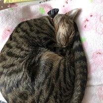 キジトラ猫   ニイナのつぶやきの記事に添付されている画像