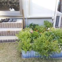 秘密の花園、二十週間経過。咲いた♪咲いた♪の記事に添付されている画像