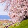 春が来た。の画像