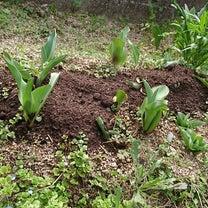 我が家の庭の事情。の記事に添付されている画像
