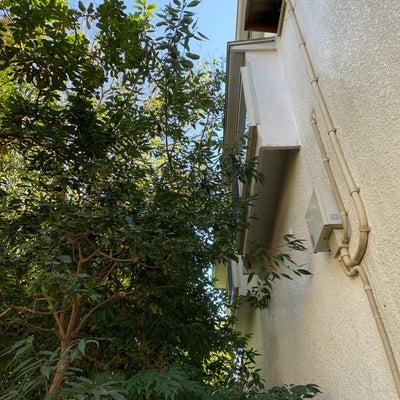ガーデンドクターの手伝い❣️IN茅ヶ崎のお宅(^^)の記事に添付されている画像