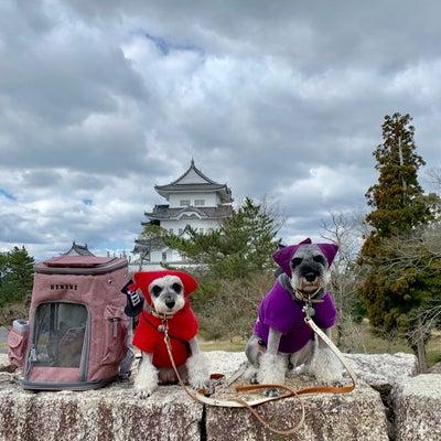 2019'ぶらり春旅(о´∀`о)〜拙者は忍者修行中でござる〜の記事に添付されている画像