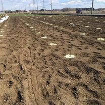 【農園】籾殻祭りの記事に添付されている画像