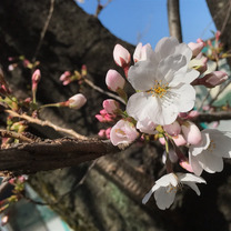 春です!天地人クリスタルボウル・セラピーの感想②の記事に添付されている画像