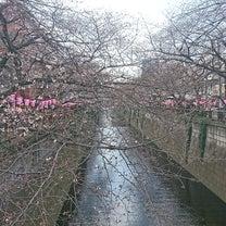目黒川桜祭りの記事に添付されている画像