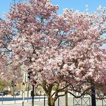 無視していたら・・magnoliaの記事に添付されている画像
