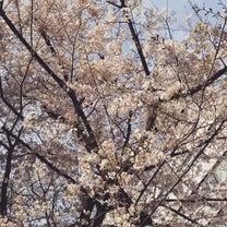 桜がどんどん咲いてきたの記事に添付されている画像