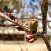 春は、自律神経の乱れやすい時期。おすすめのアロマ精油は。の記事に添付されている画像