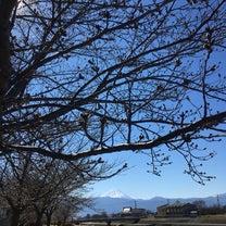 桜の開花調査員?と、ペットと防災の教室の記事に添付されている画像