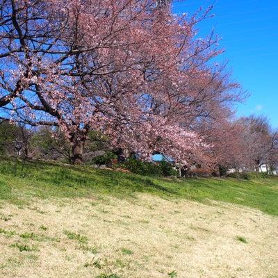 桜は!?まだかな!?の記事に添付されている画像