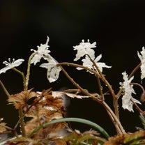 早春の雨の記事に添付されている画像