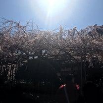 桜の記事に添付されている画像