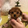 #小型犬の画像