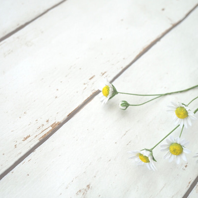 成長するお花の記事に添付されている画像