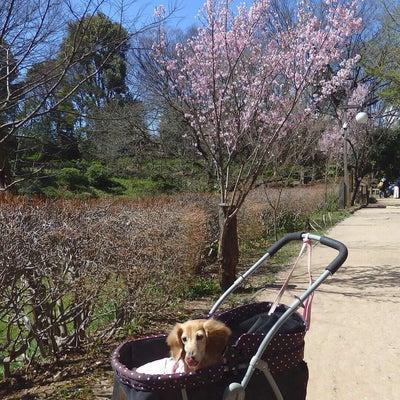 桜を見て思うことの記事に添付されている画像