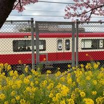 三浦海岸の河津桜。の記事に添付されている画像