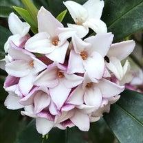 お花も空気感を創るの記事に添付されている画像