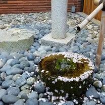 桜散り始めた!の記事に添付されている画像