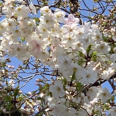 小春日和の記事に添付されている画像