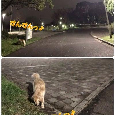 1,137、平日のこと(3/22)&トレランの応援のために愛知県新城へ(3/23の記事に添付されている画像