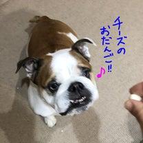 脂肪織炎、少しよくなってます!(^▽^)の記事に添付されている画像