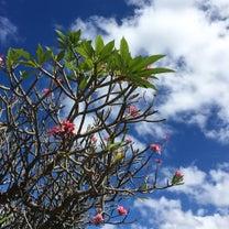 芽吹きの季節の記事に添付されている画像