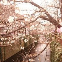 中目黒 目黒川の桜!の記事に添付されている画像