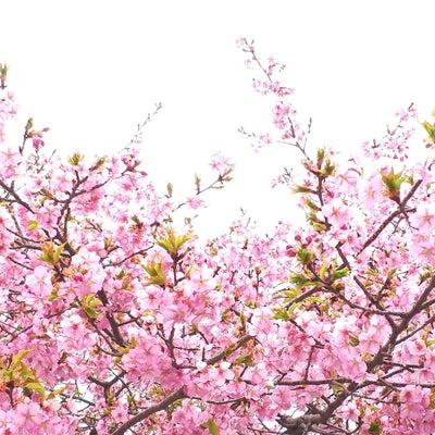 信州!河津桜の風景撮影①の記事に添付されている画像