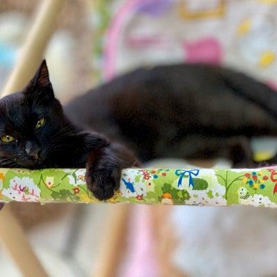 猫に会えなくなる方が良い事だって、あるの記事に添付されている画像