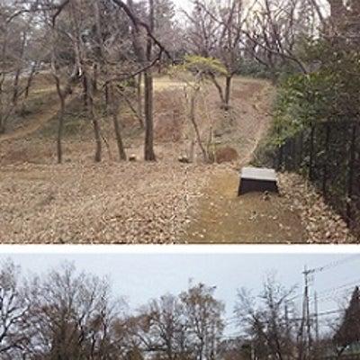 【咲いて埼玉】花見ラン~ 2018/2019 シーズン振り返り(その3.シーズンの記事に添付されている画像