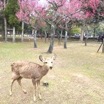 京都へお墓参り①の記事に添付されている画像