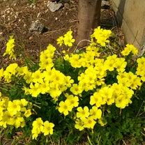 春の色は黄色っぽい説の記事に添付されている画像