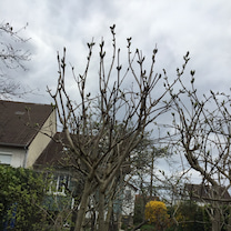 le temps des lilas リラの木をみたよの記事に添付されている画像