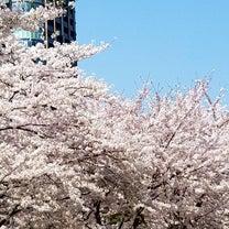 お花見の季節だねの記事に添付されている画像