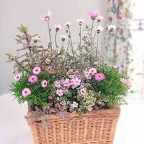 ローダンセマムのバスケット♡お花の教室神戸の記事に添付されている画像
