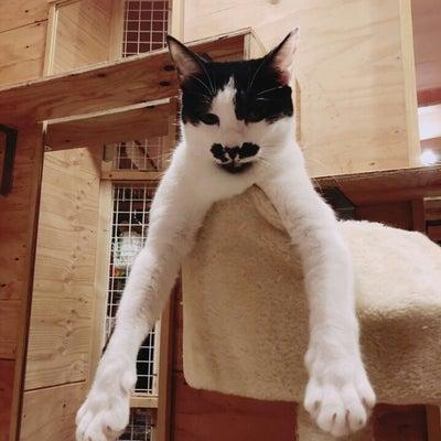 リアル猫活動「心配な子たち~安楽死は、、。」の記事に添付されている画像
