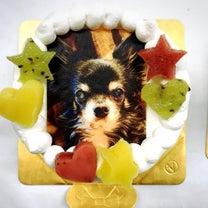 ワンコ写真ケーキl 菓の香サプライズケーキ制作実績の記事に添付されている画像