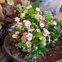 ウエディング花キリンの記事に添付されている画像