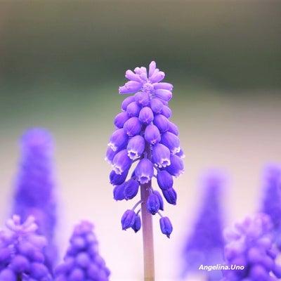 その青紫・・・の記事に添付されている画像