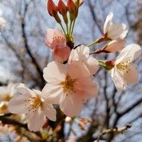 1y6m26d 昨日はお花見へ(✿´꒳`)ノ°+.*の記事に添付されている画像